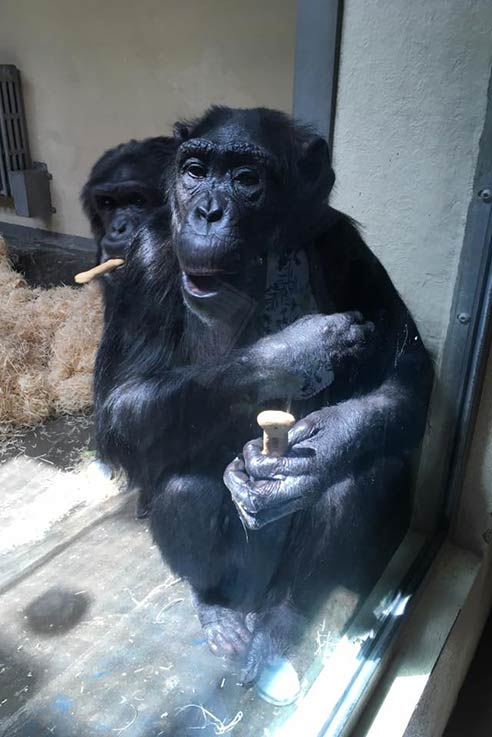 Monkey World Dorset