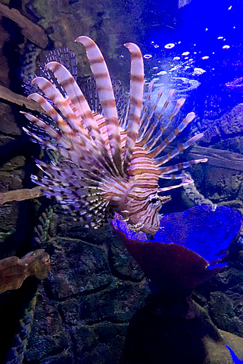 Sealife centre Weymouth