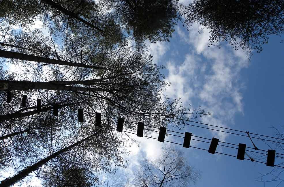 Moors Valley woodland walk