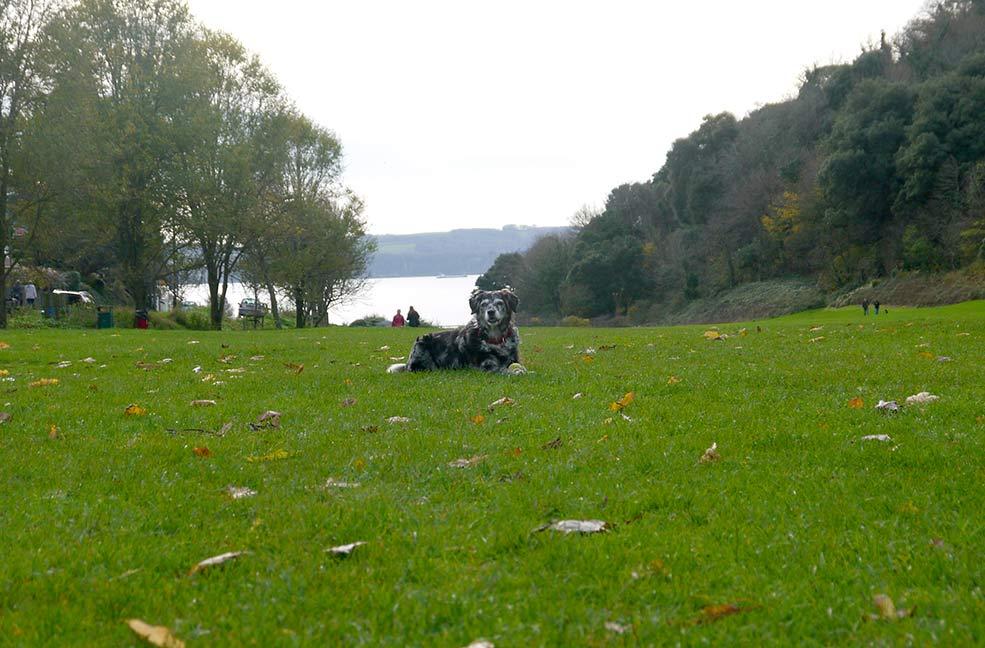 Little Theatre circular dog walk in Devon