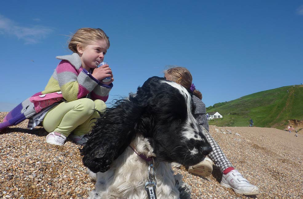 Dog friendly Dorset