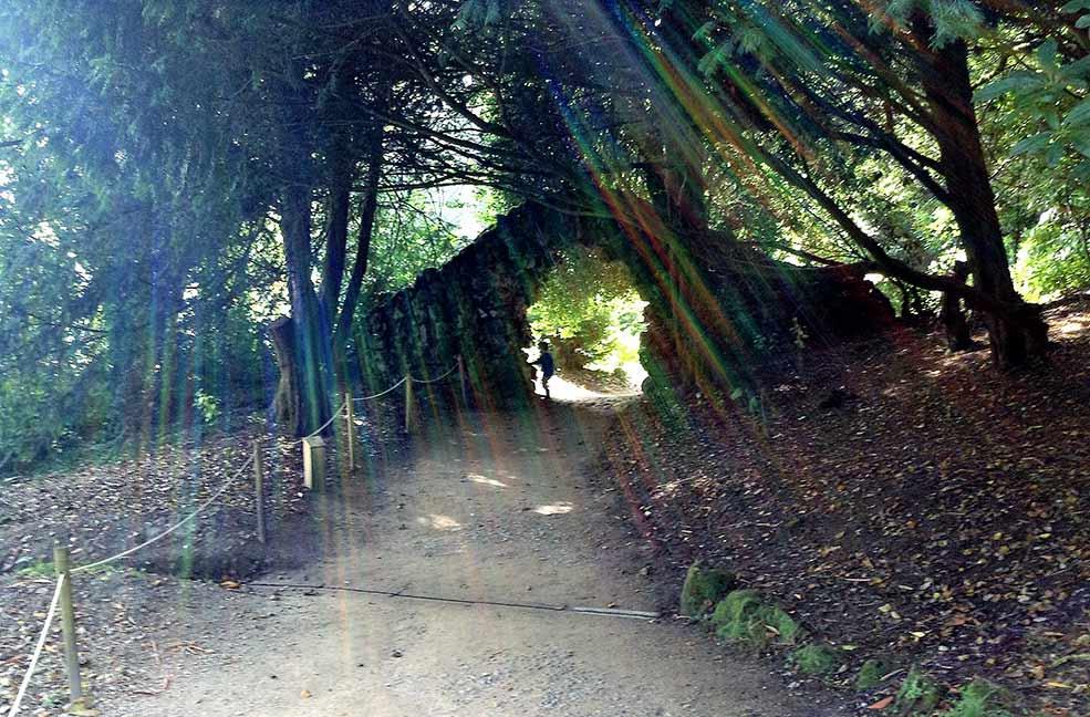Stourhead tree climbing