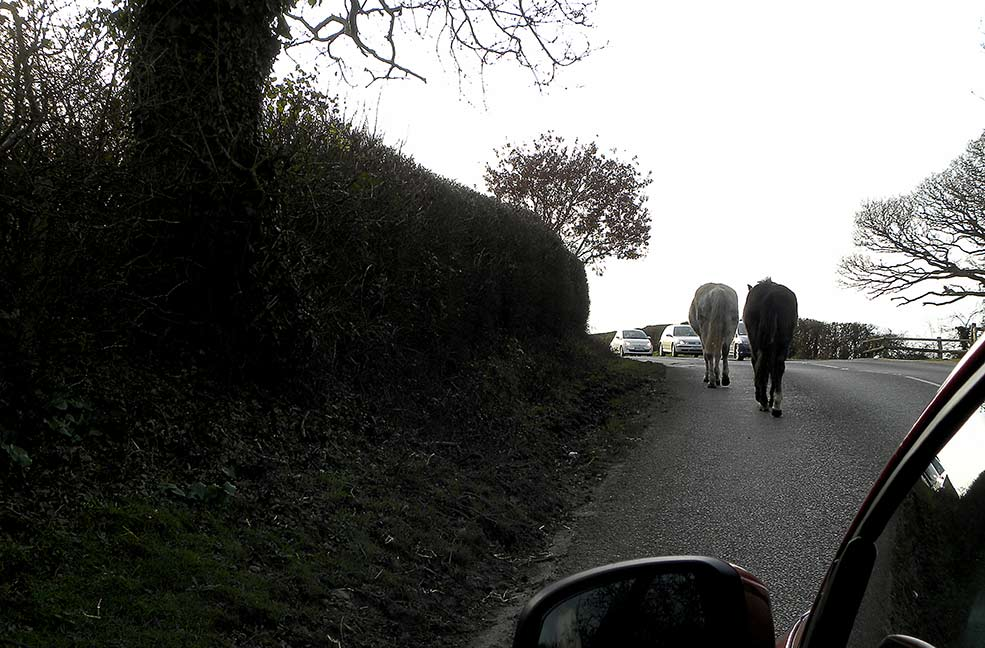 The trouble with free range ponies