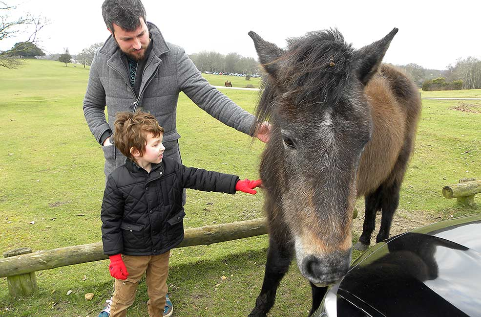 See the New Forest ponies up close