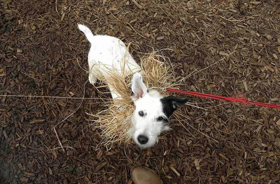Dog friendly park in Dorset