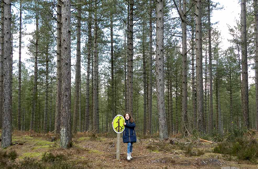 Woodland trails in Moors Valley