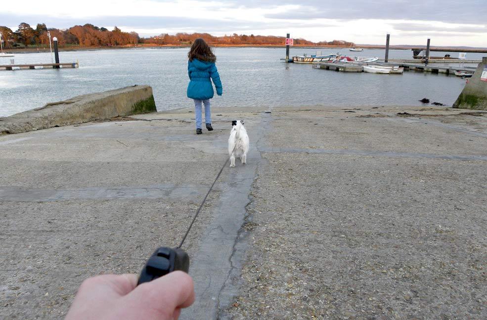 Dog walk in Lymington