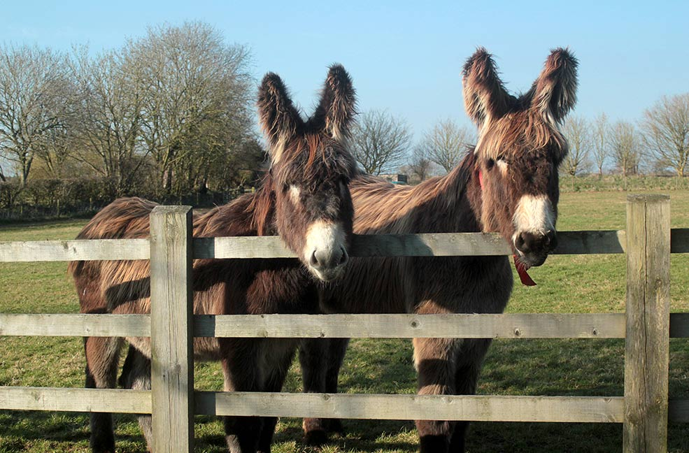 Family Holidays: Donkey Sanctuary