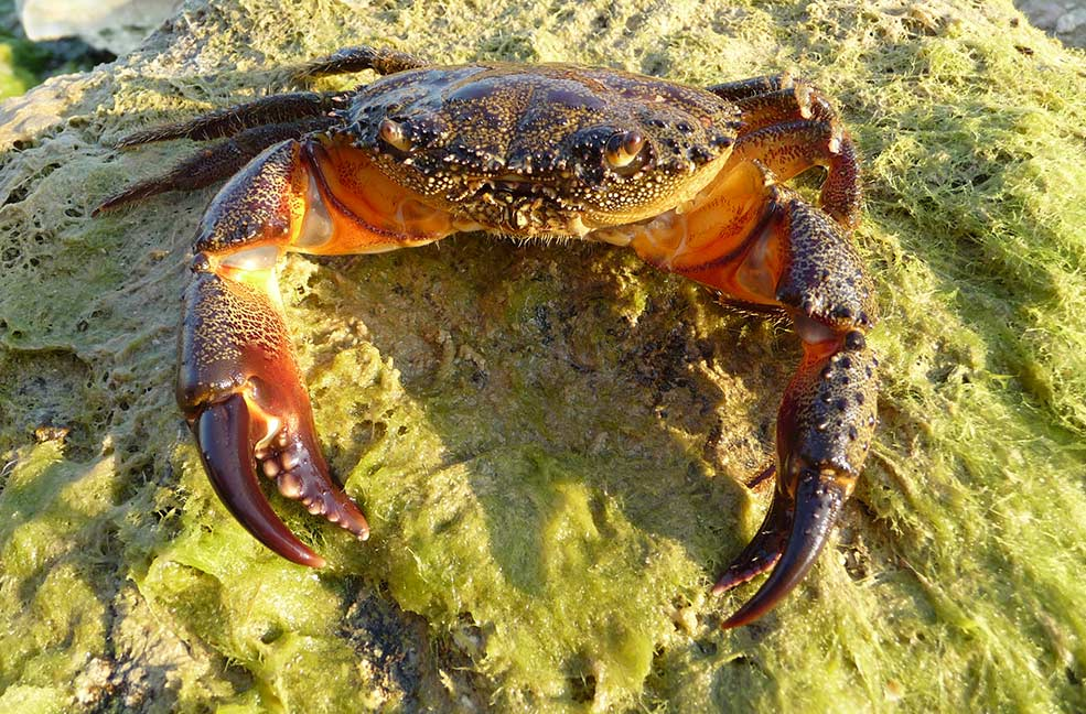 Crabbing in Hampshire