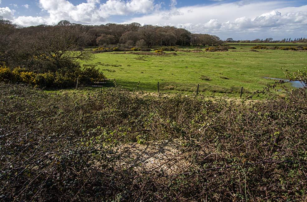Hayling Island grassland