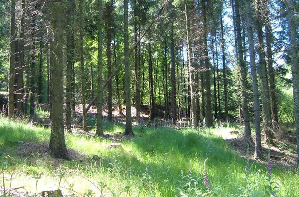 Blackdown Hill Ferne Animal Sanctuary