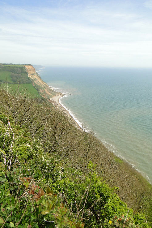 A Jurassic Coast dog walk