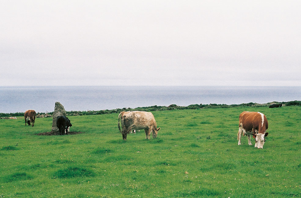 Ancient monuments, standings stones and cows
