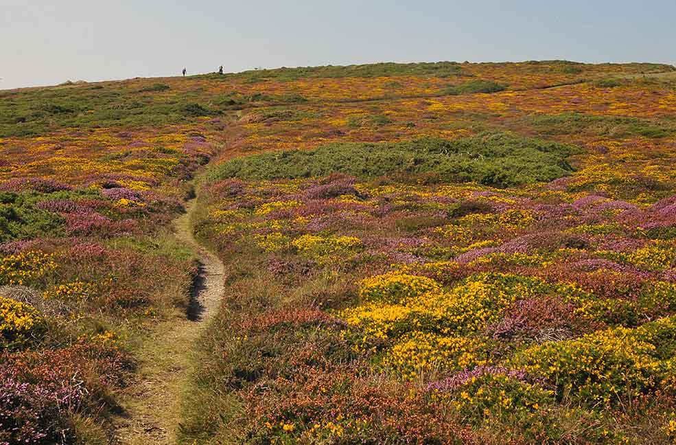 Penwith heather carpet