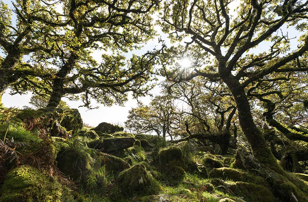 5 woodland walks in Devon