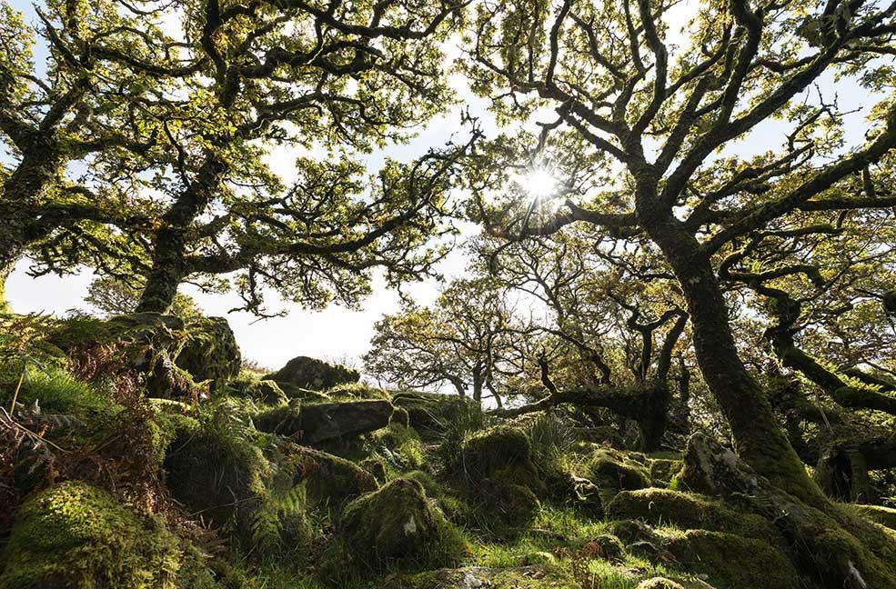 5 woodland walks in Devon