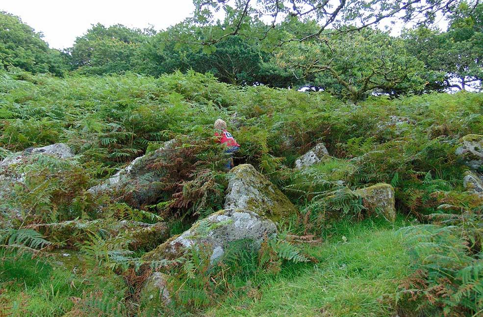 Adventuring through the shrubs of Devon's woodland.