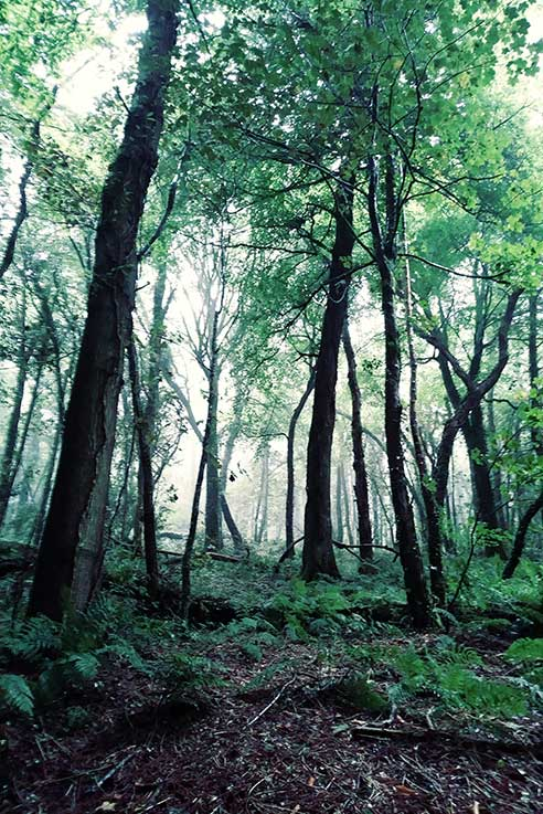 There's something so magical about the green forests in Devon.