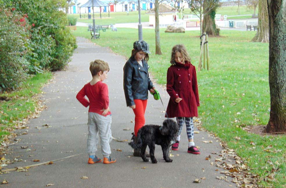 Dog walking south Devon