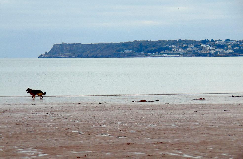 5 Dog friendly beaches in south Devon