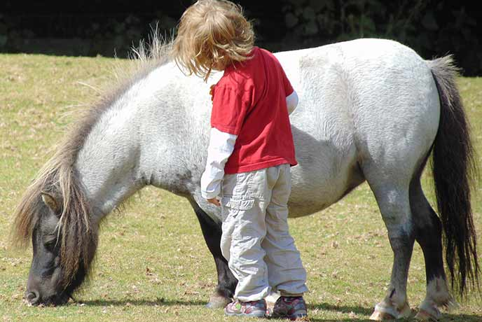We love visiting the miniature ponies in Moretonhampstead with little ones.