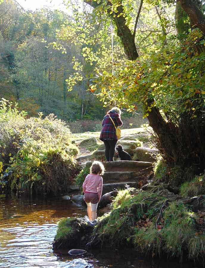 Take a walk in the sunshine along these dog friendly walks in Dartmoor.