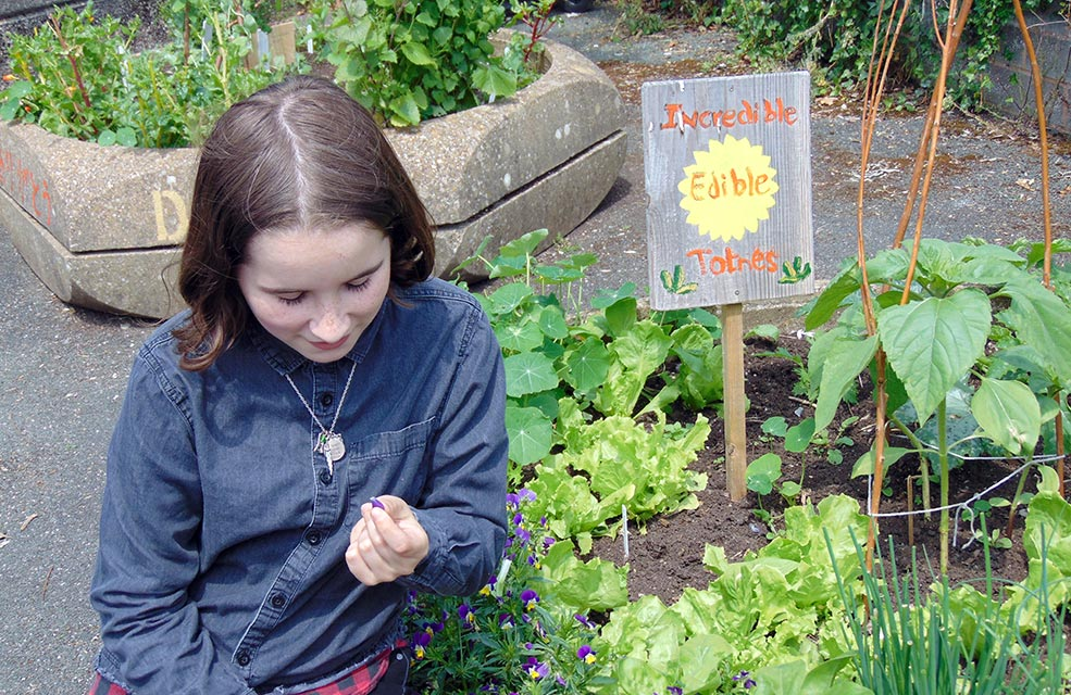 Forage through the raised beds in Totnes. Perfect for introducing children to foraging.
