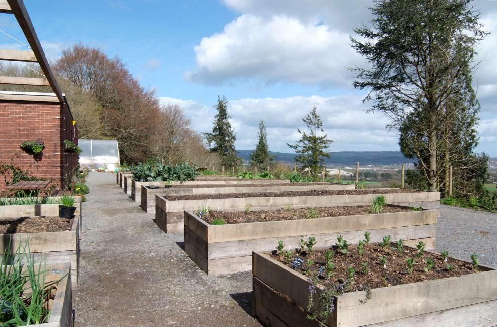 Seale-Hayne veg garden