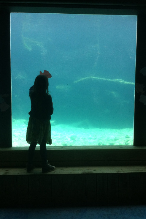 Living coasts underwater exhibit