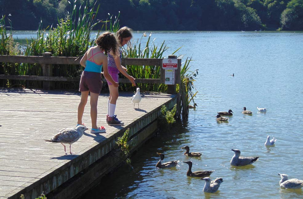 Things to do in Newton Abbot