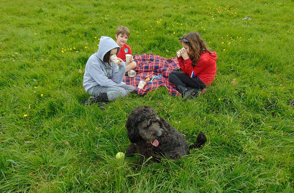 Perfect picnic places in south Devon