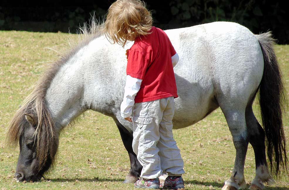 Pony stroke