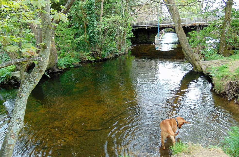 Bovey Travey river