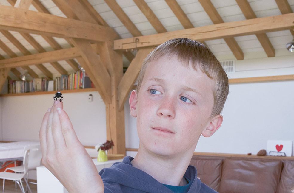 Beetle study by Annabel Elston