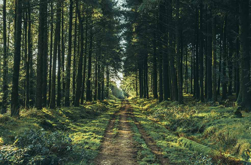 The forests stretching through this photo create depth making the viewer feel more present in the photograph.