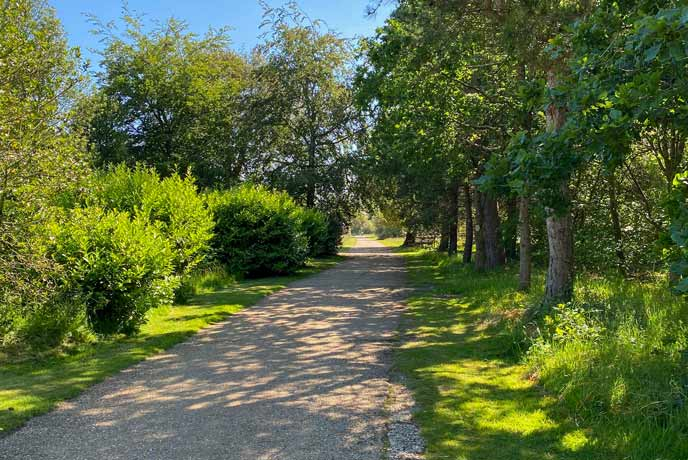 An avenue of trees at the Isle of Wight's Osborne House