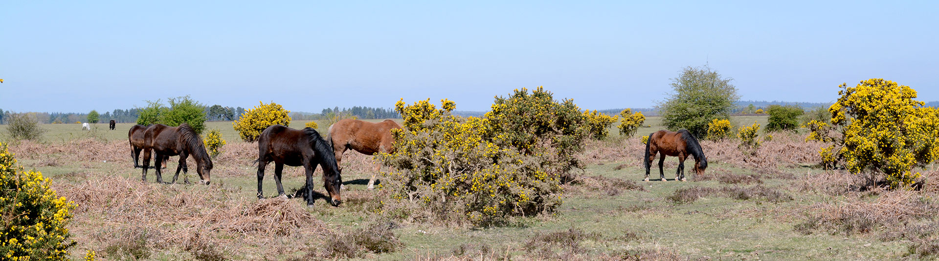 Holiday cottages in the New Forest, Hampshire